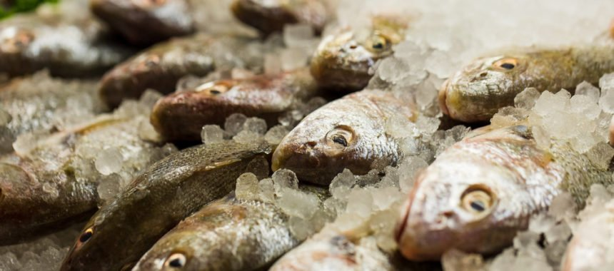 10 Jenis Ikan Laut di Indonesia Yang Sering di Konsumsi