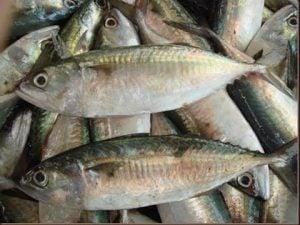 ikan-kembung