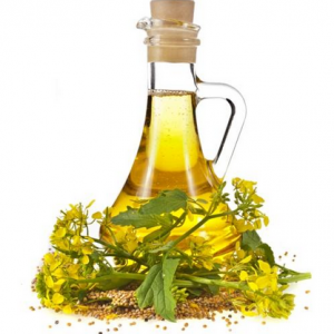 minyak-mustard